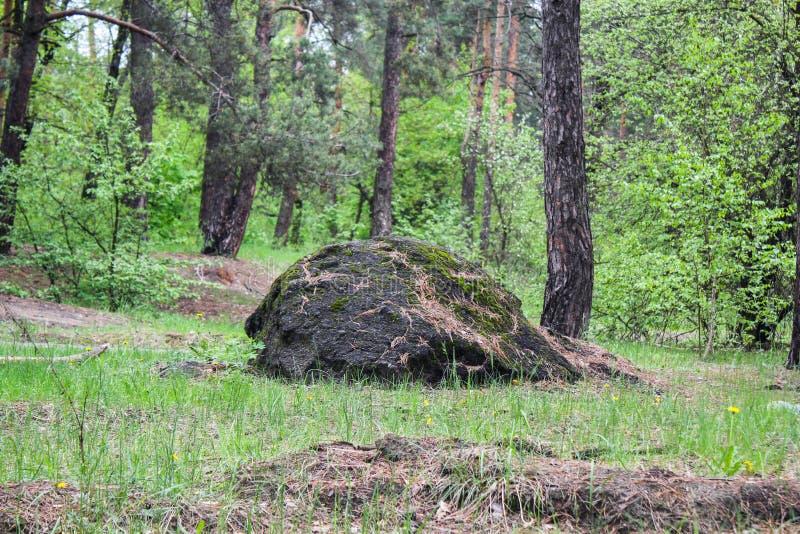 Piedra enorme en el medio de la piedra del bosque en el medio del bosque foto de archivo libre de regalías