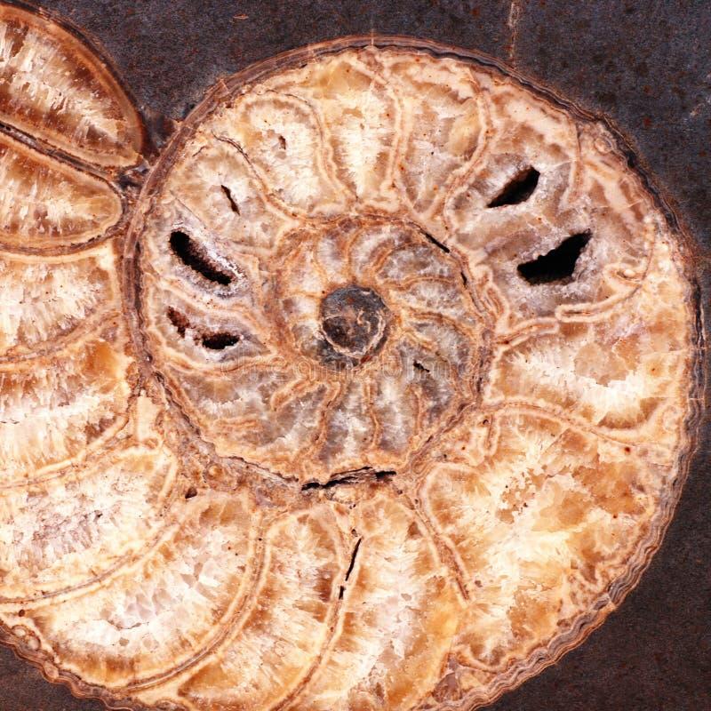 Piedra fósil imagen de archivo libre de regalías