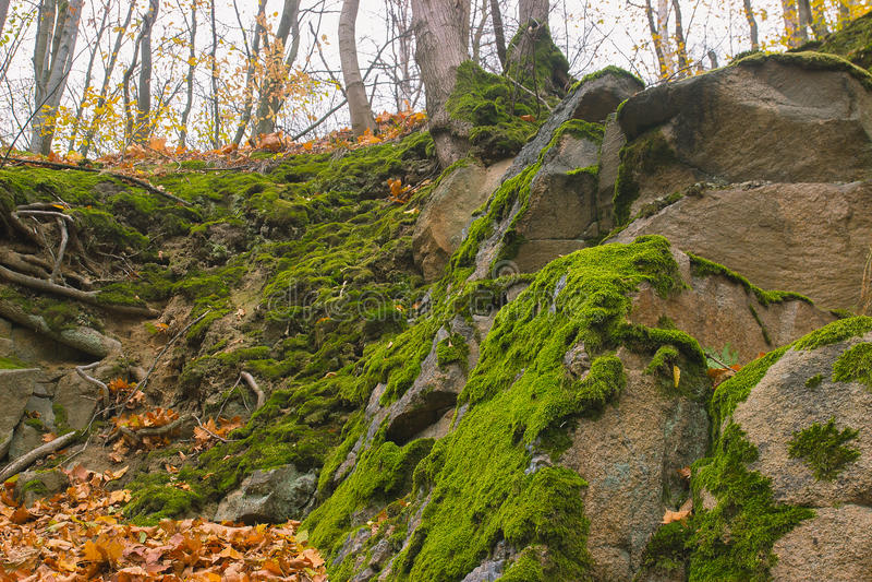 Piedra gris con el fondo verde de la textura del musgo imágenes de archivo libres de regalías
