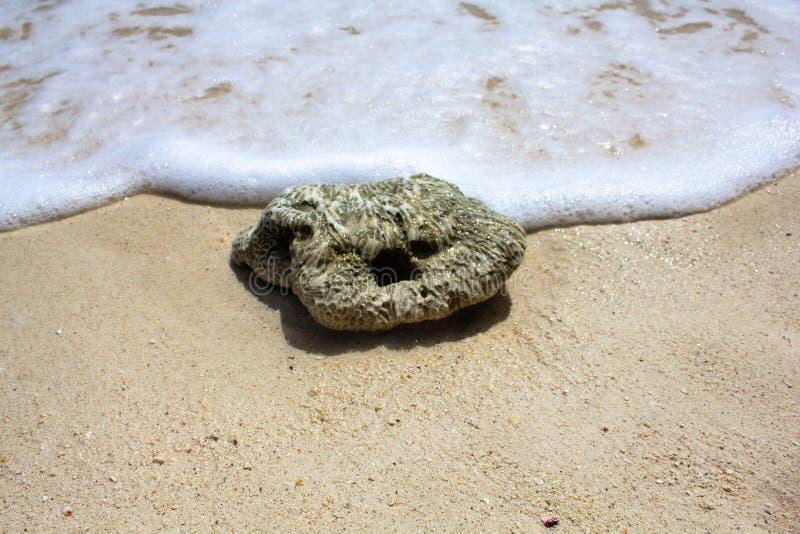 Piedra mojada en la playa, lavada por la onda y la espuma blanca Un guijarro en una playa soleada fotografía de archivo libre de regalías
