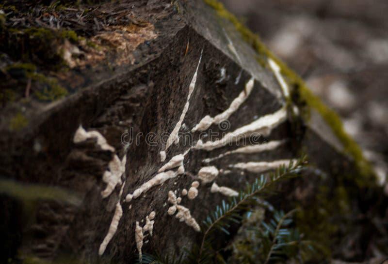 Piedra negra con las rayas blancas en un fondo borroso del bosque imagen de archivo