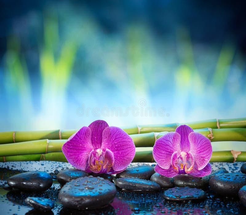 Piedra y bambú de las orquídeas del fondo en jardín fotografía de archivo libre de regalías