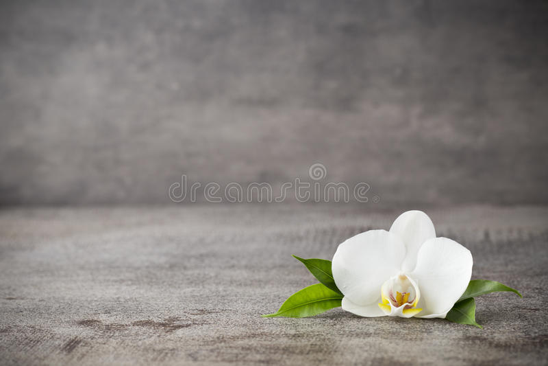 Piedras blancas de la orquídea y del balneario en el fondo gris fotos de archivo