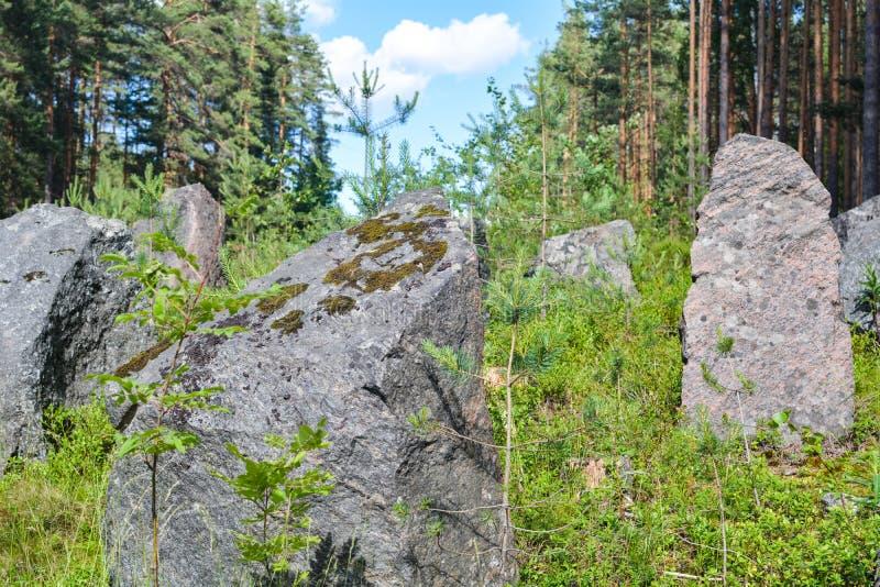 Piedras cubiertas de musgo en la línea de la Segunda Guerra Mundial, región de Leningrad, Rusia de la defensa fotos de archivo