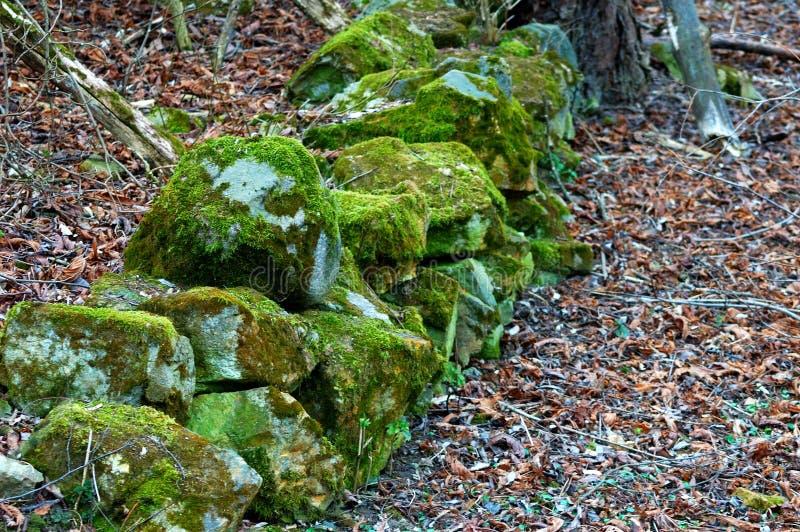 Piedras cubiertas de musgo entre abajo falled las hojas foto de archivo libre de regalías