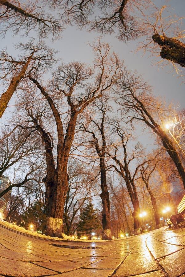 Piedras de pavimentación mojadas originales de la opinión de la noche imagen de archivo libre de regalías
