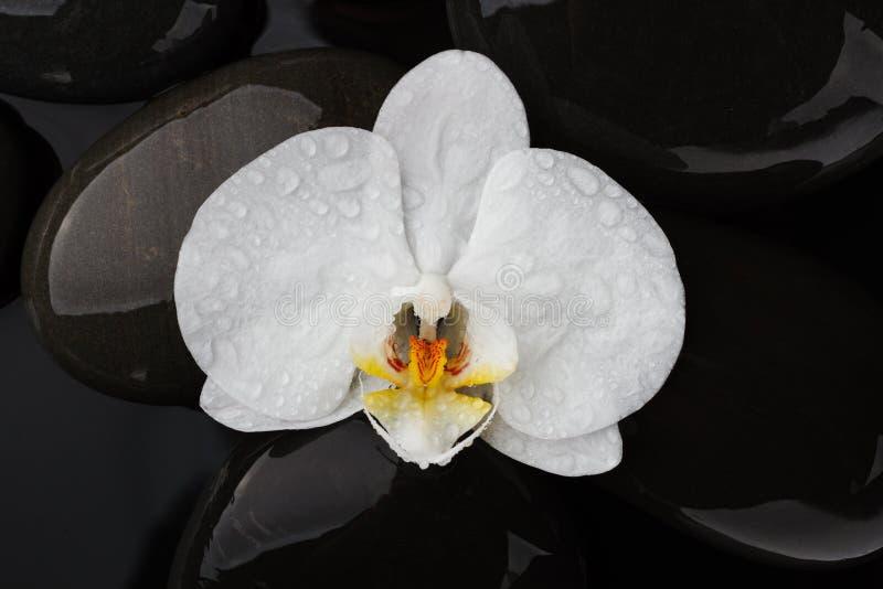 Piedras del guijarro y flor blanca de la orquídea fotos de archivo libres de regalías