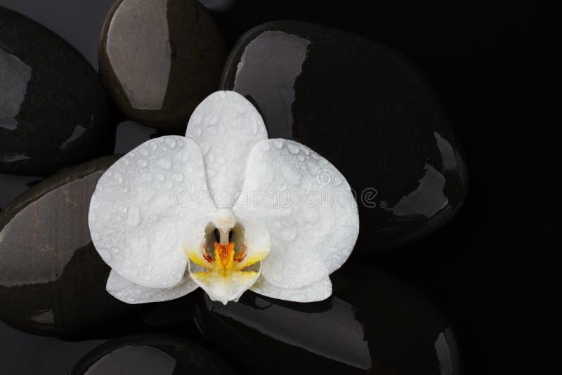 Piedras del guijarro y orquídea de la flor blanca en fondo negro foto de archivo
