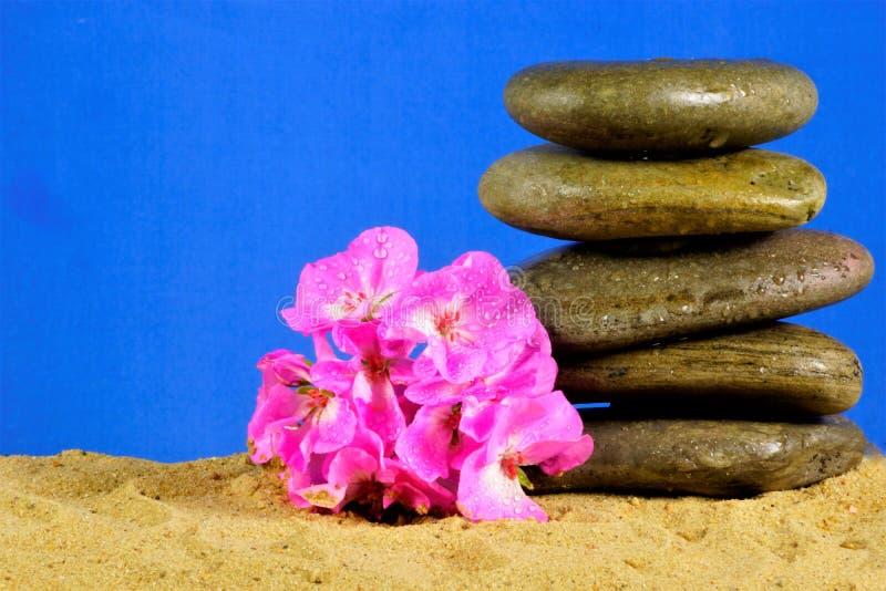Piedras del mar - balanza en la arena y la flor rosada en fondo azul Piedras del origen natural mojadas con la agua de mar, para  foto de archivo libre de regalías