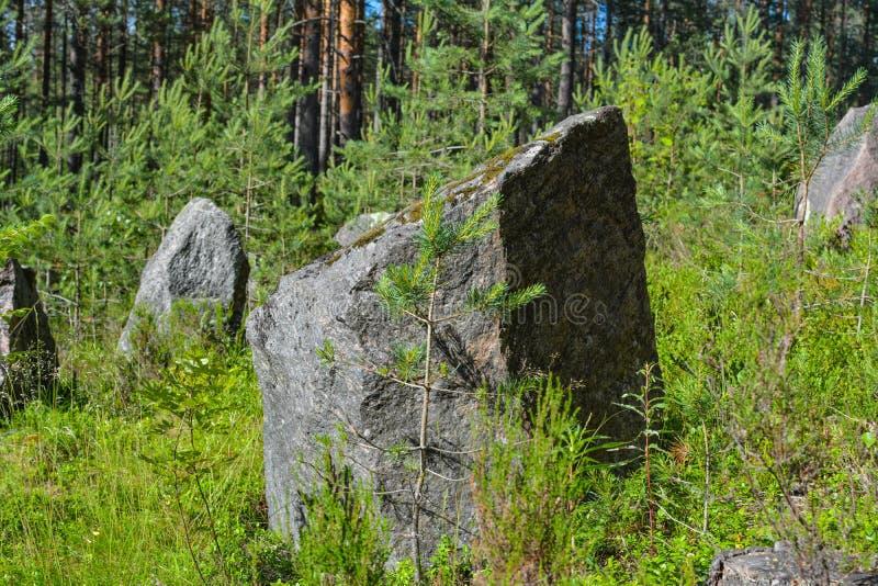 Piedras en la línea antitanques de la Segunda Guerra Mundial, región de Leningrad, Rusia fotos de archivo libres de regalías