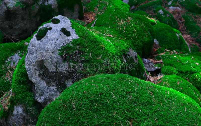 Piedras grandes cubiertas de musgo verdes coloridas Foto que representa un espeso brillante fotografía de archivo