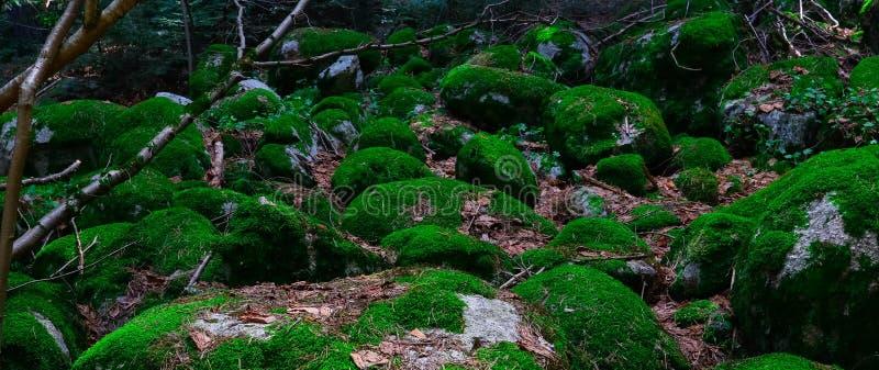 Piedras grandes cubiertas de musgo verdes coloridas Foto que representa un espeso brillante foto de archivo libre de regalías