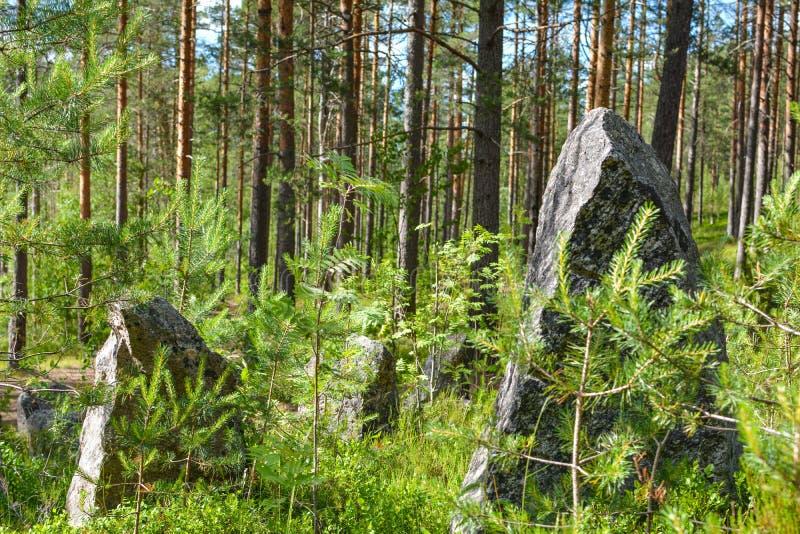 Piedras grandes en la línea de la Segunda Guerra Mundial, región de Leningrad, Rusia de la defensa imagen de archivo