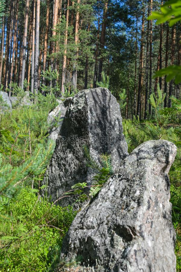 Piedras grises en la línea de la Segunda Guerra Mundial, región de Leningrad, Rusia de la defensa imagen de archivo