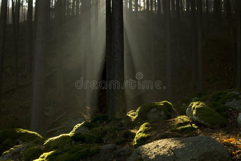 Download Piedras Moss-grown foto de archivo. Imagen de sombras - 7283866