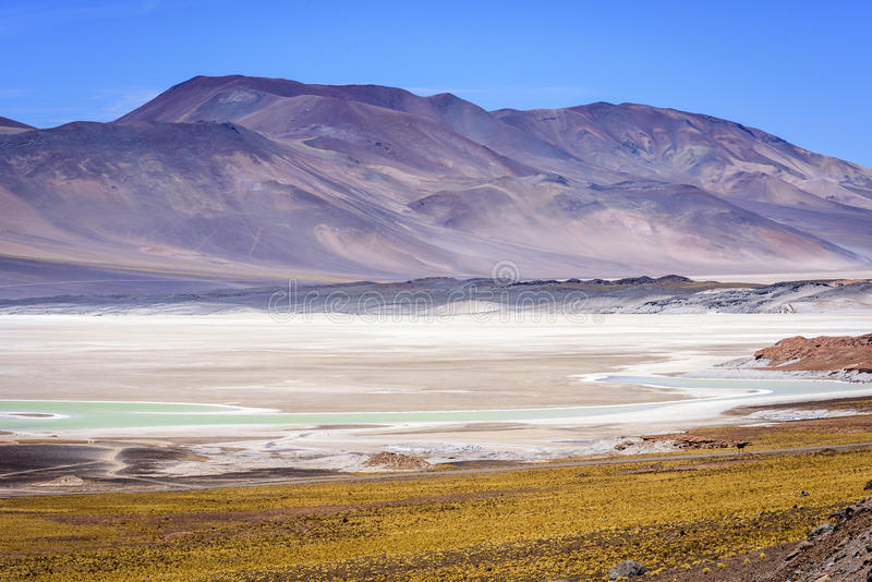 Piedras Rojas, Atacama, peperoncino rosso immagine stock