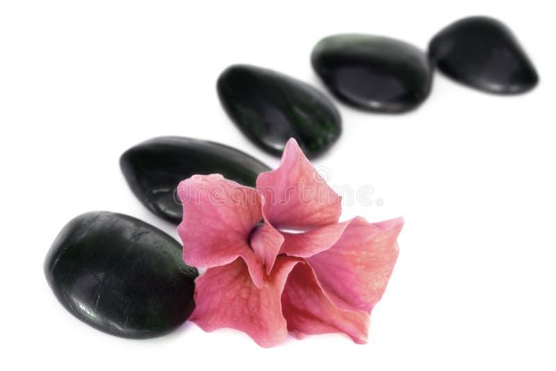 Piedras y flor del balneario imagenes de archivo