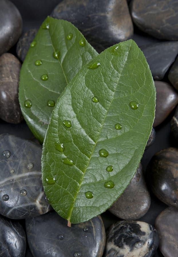 Piedras y hojas del zen con agua imágenes de archivo libres de regalías