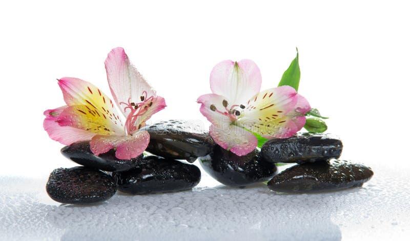 Download Piedras Y La Flor De Un Alstroemeria Foto de archivo - Imagen de balneario, flora: 41921342