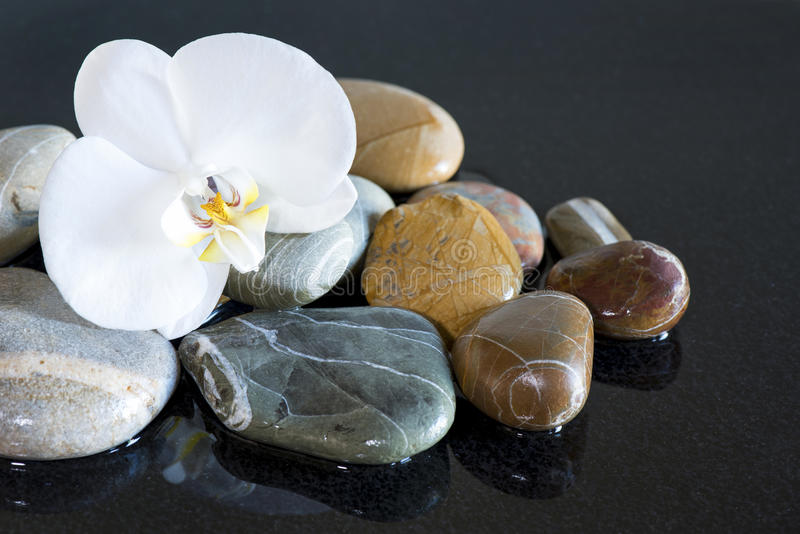 Piedras y orquídea imagenes de archivo