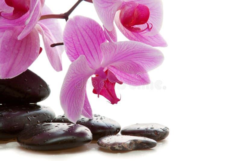 Piedras y orquídea del balneario imagenes de archivo