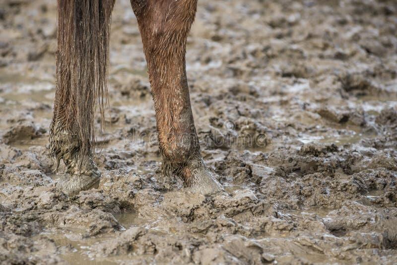 Pieds de cheval dans la boue image libre de droits