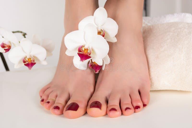 Pieds de fille avec la pédicurie rouge foncé de couleur sur les clous et la décoration blanche de fleur d'orchidée image libre de droits