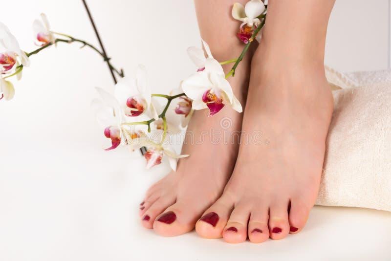 Pieds de jeune femme avec la pédicurie rouge foncé de couleur sur les clous et la décoration blanche de fleur d'orchidée photographie stock libre de droits
