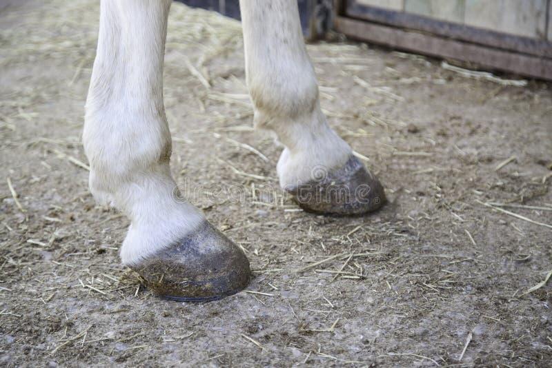 Pieds de sabot de cheval photo libre de droits