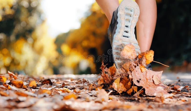 Pieds de turbine d'automne photographie stock libre de droits