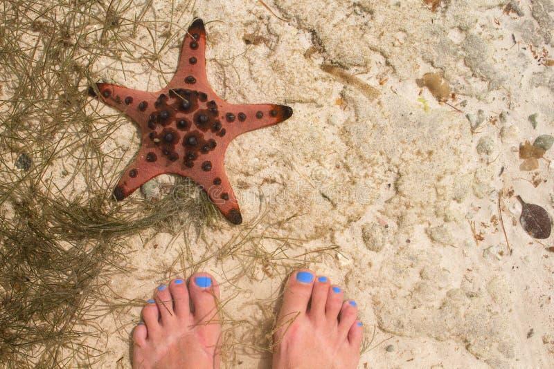 Pieds rouges d'étoiles de mer et de femme en eau de mer Bord de la mer avec le sable blanc photo stock