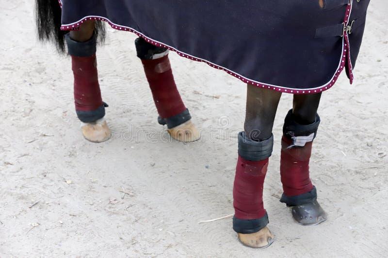 Pieds sains de cheval d'un cheval de pullover d'exposition photo stock