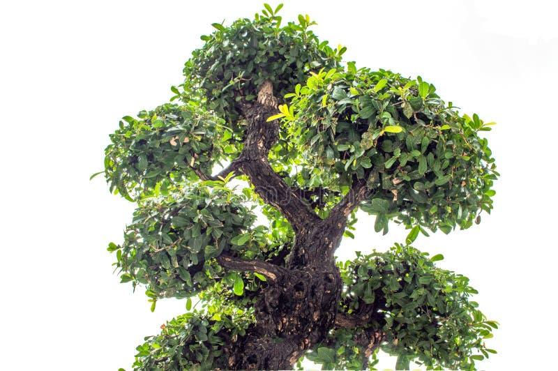 Piegamento degli alberi immagini stock libere da diritti