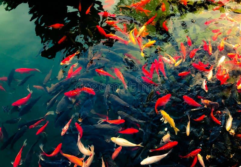 PIEJĄCA ryba