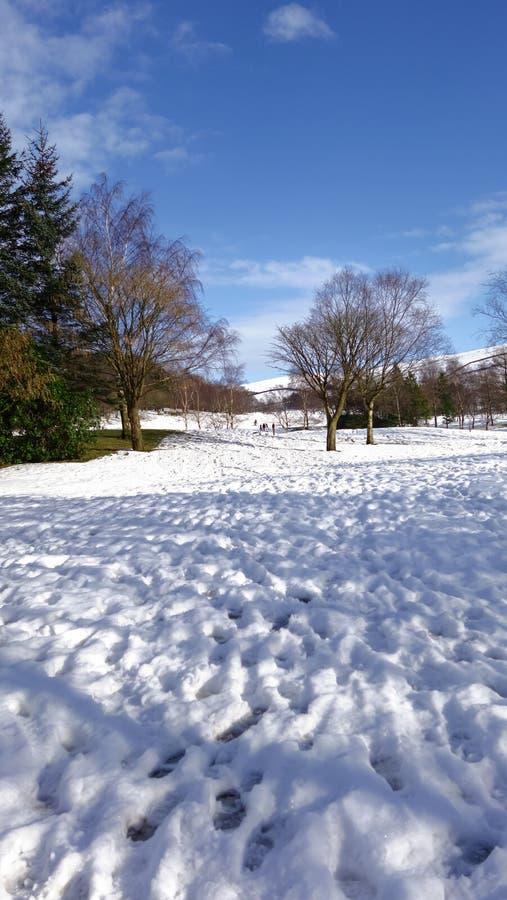 Piekdisctrict, het UK, sneeuw en bomen met blauwe hemel stock afbeelding