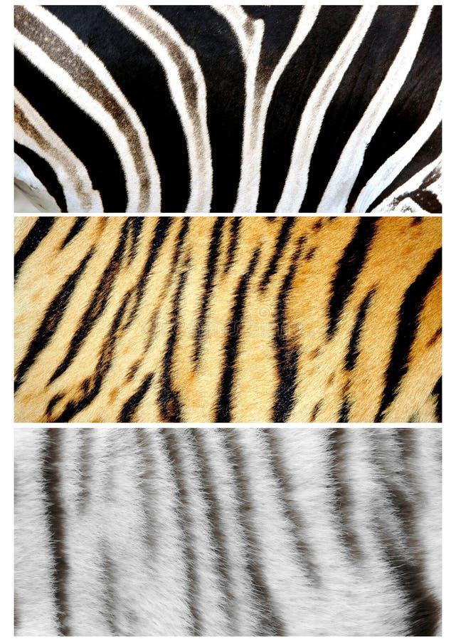Piel de animales imágenes de archivo libres de regalías