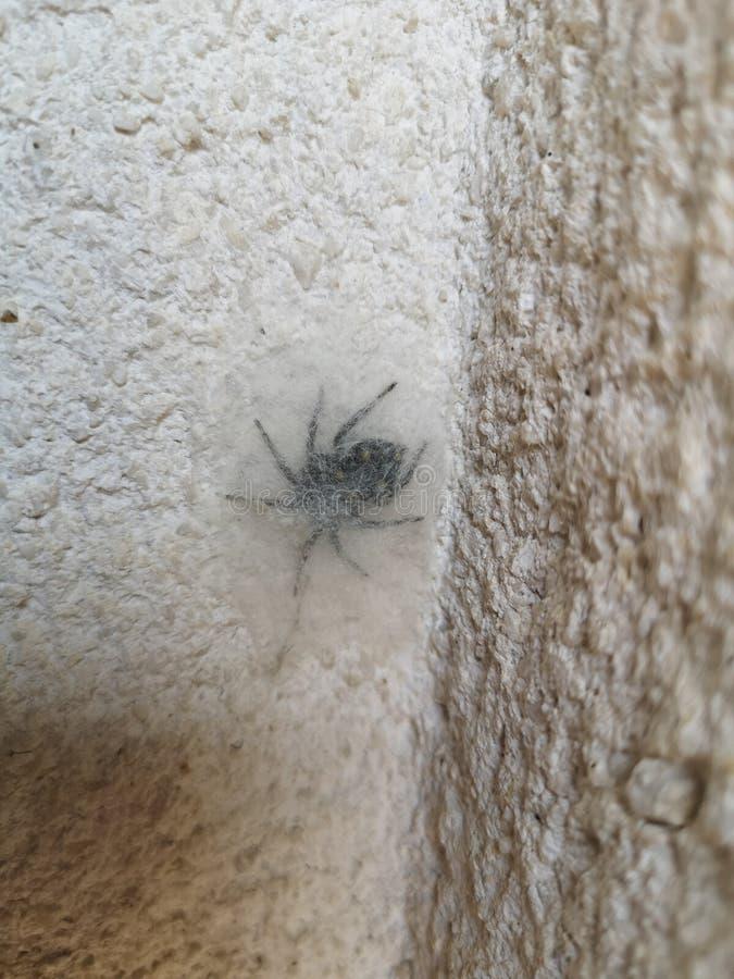 Piel de la araña fotografía de archivo libre de regalías