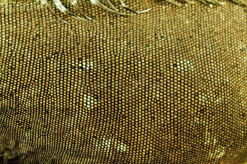Piel de la iguana imagen de archivo libre de regalías