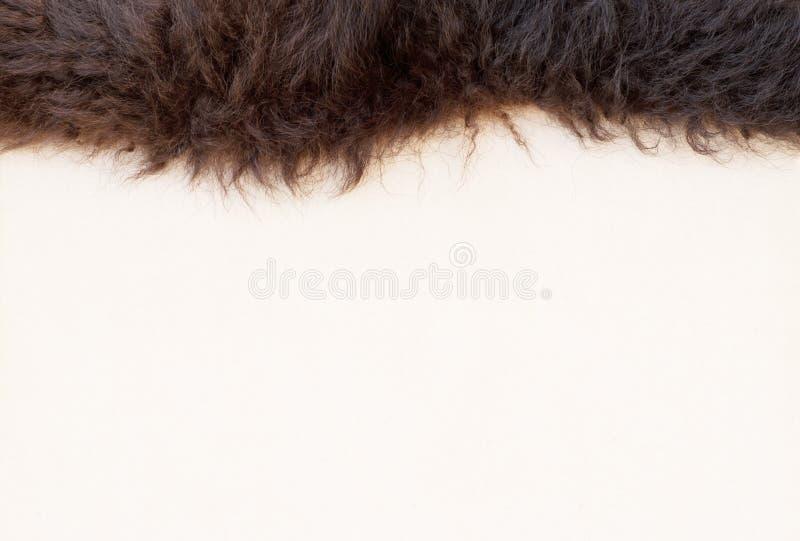 Piel de la piel del búfalo en el borde de la tarjeta de mensaje en blanco imagenes de archivo