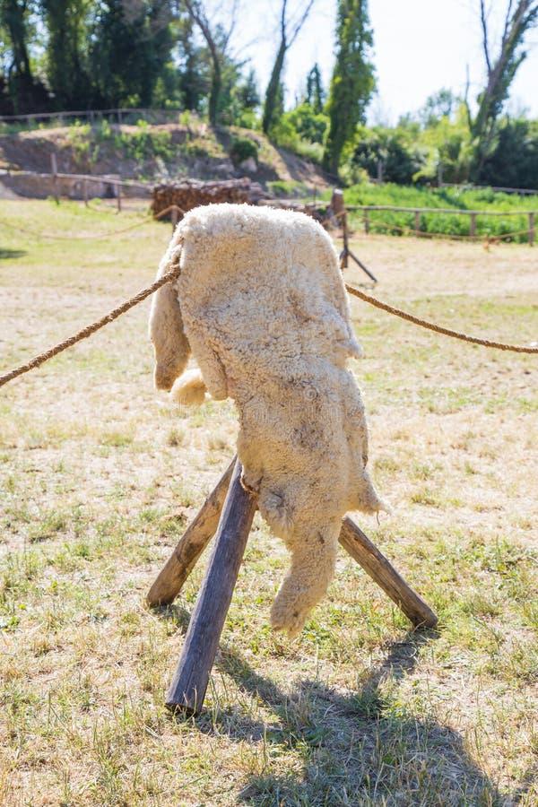 Piel de las ovejas imagen de archivo