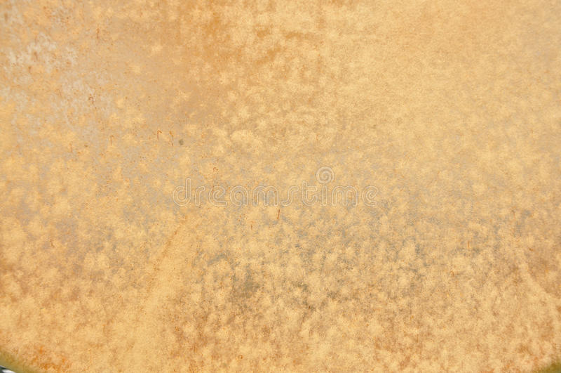 Piel de los alces foto de archivo libre de regalías