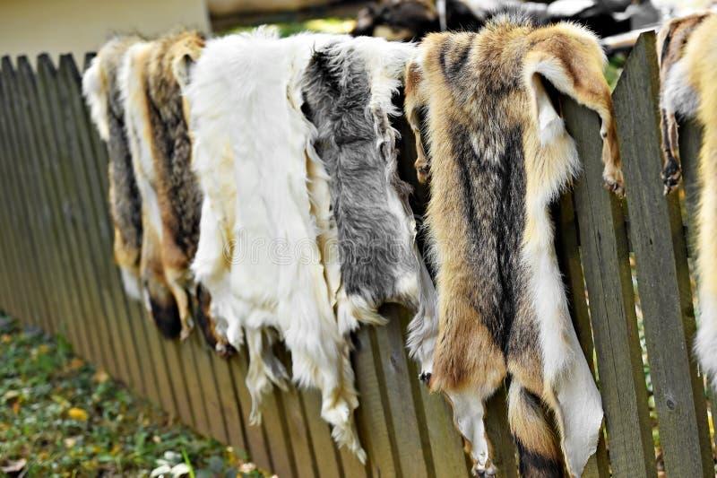 Piel de los animales para la ropa en una cerca de madera imagen de archivo libre de regalías
