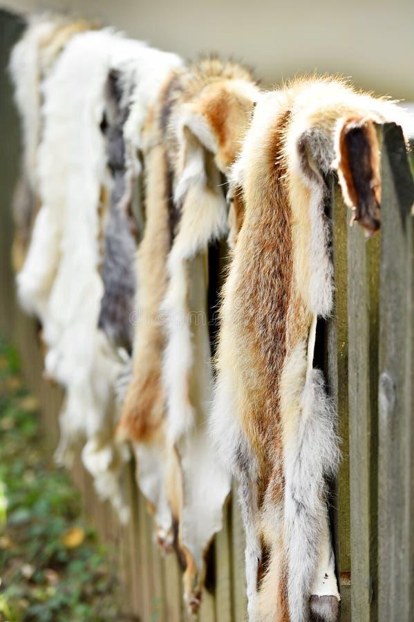 Piel de los animales para la ropa en una cerca de madera foto de archivo