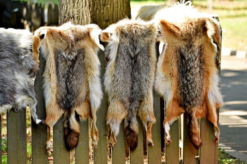Piel de los animales para la ropa en una cerca de madera foto de archivo libre de regalías