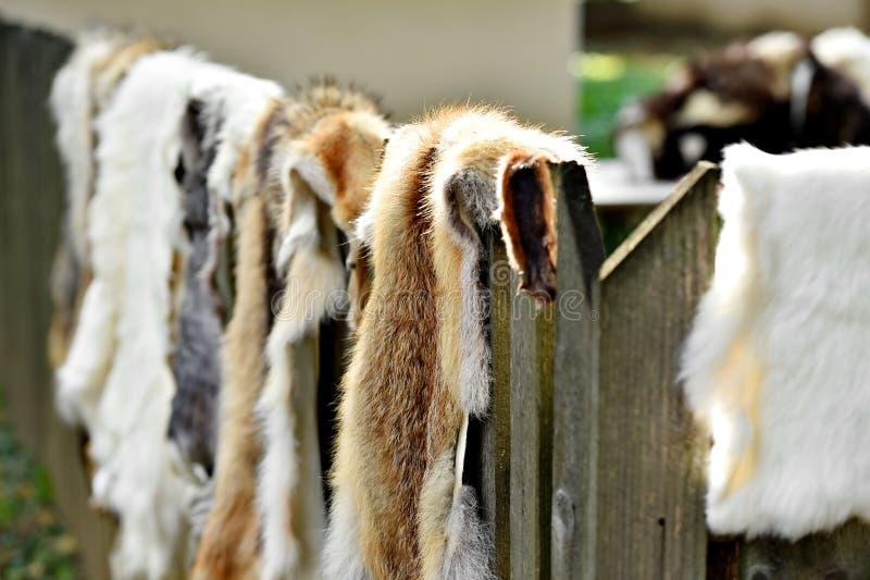 Piel de los animales para la ropa en una cerca de madera imagenes de archivo