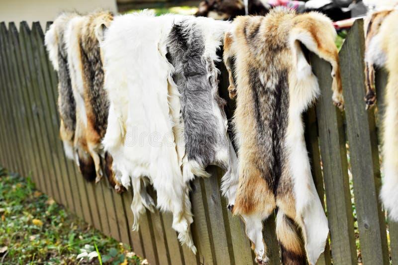 Piel de los animales para la ropa en una cerca de madera fotografía de archivo