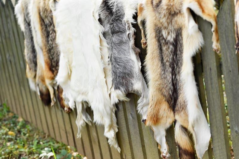 Piel de los animales para la ropa en una cerca de madera imágenes de archivo libres de regalías