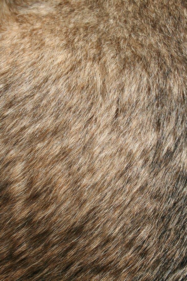 Piel de los perros imagen de archivo libre de regalías
