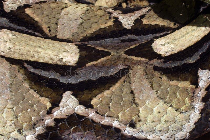 Piel de serpiente fotografía de archivo