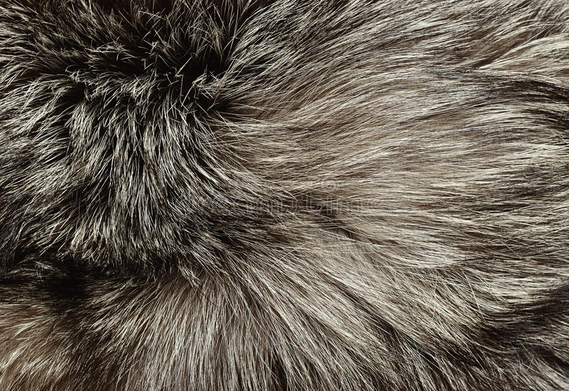 Piel de zorro plateado foto de archivo